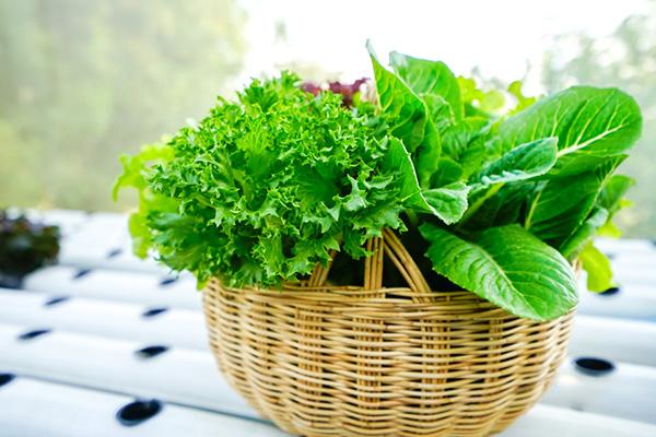 Rau xà lách trộn là thực phẩm không thể bỏ qua bởi sự tươi mát mà nó mang lại