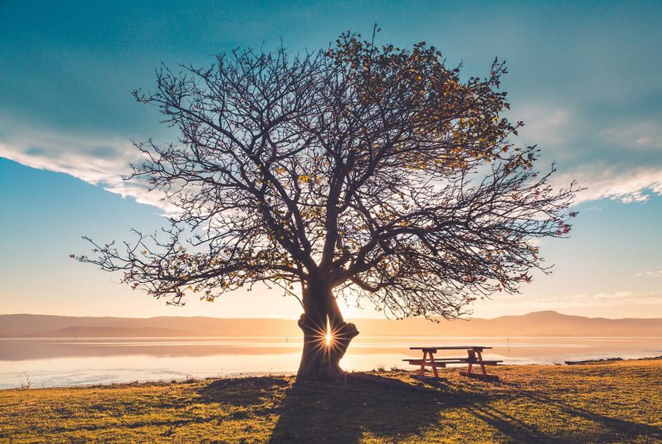 Ánh cây