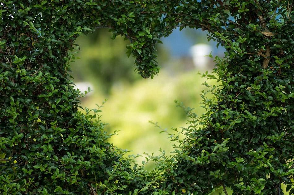 Bụi cây được cắt thành hình trái tim