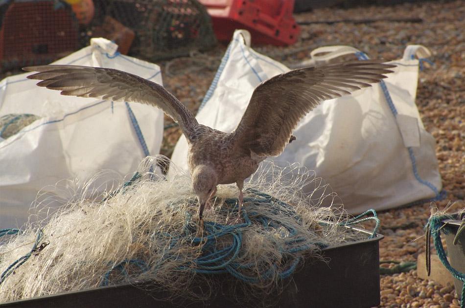 Một chú chim đang đứng trên đống lưới