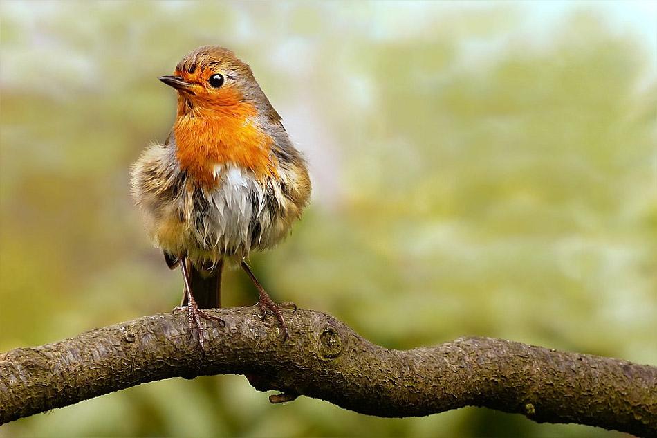Chú chim trên cành cây