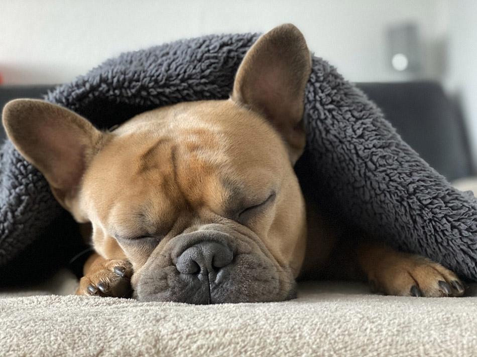Chú chó đang ngủ