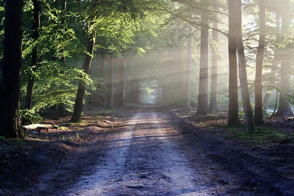 Ánh sáng chiếu xuyên qua hàng cây