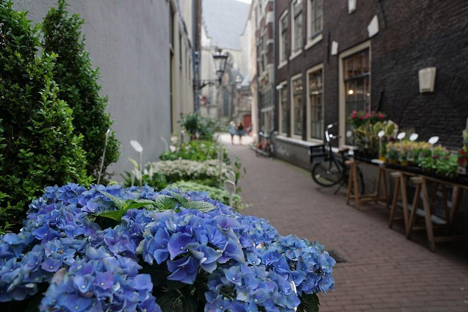 Hoa màu xanh dương