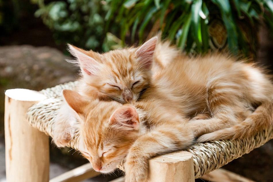 Hình hai con mèo con