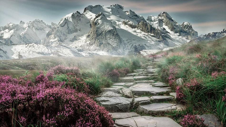 Đường hoa dẫn lên núi tuyết
