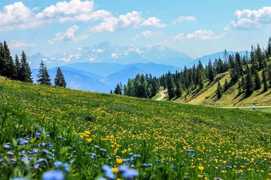 Đồng hoa bên sườn núi