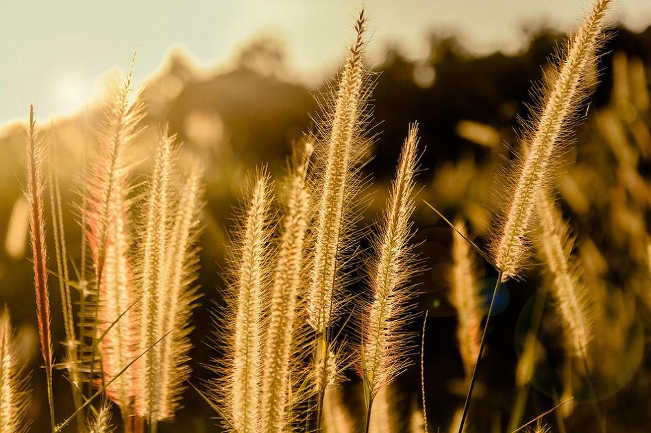 Hình đẹp về bông hoa cỏ