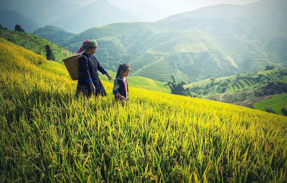 Hai mẹ con đang đi trên nương lúa