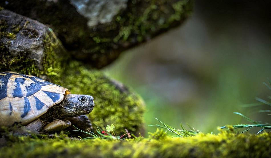 Chú rùa trong thiên nhiên