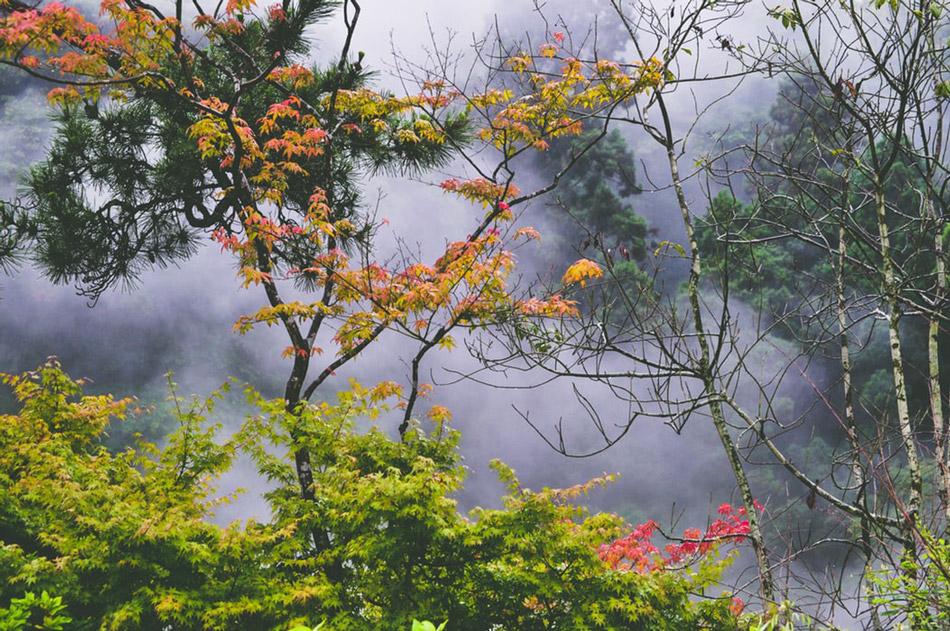 Cây cối, sương mù