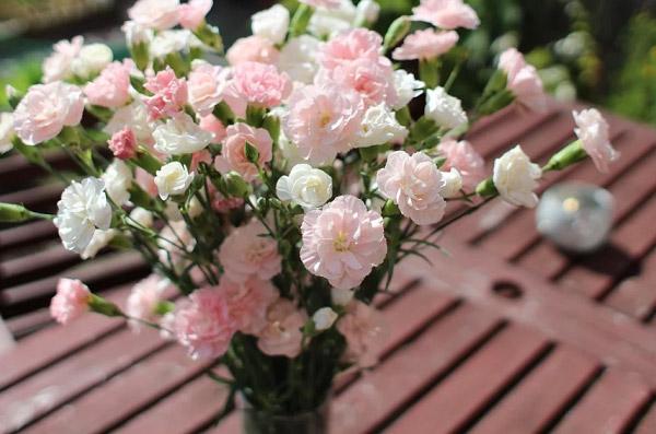 Bình cẩm chướng hồng để trang trí rất đẹp
