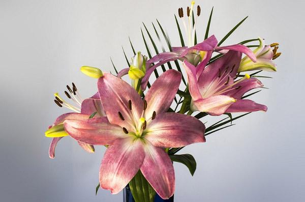 Bình hoa lily đẹp