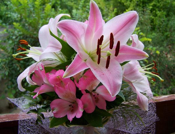 Bó hoa ly đẹp làm quà tặng