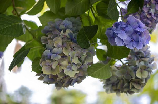 Những bông hoa khoe sắc dưới tán cây