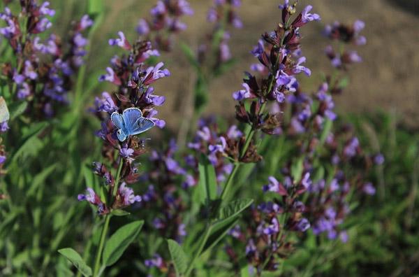 Cánh bướm và hoa