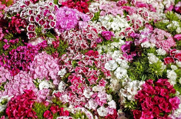Những bông hoa ngập tràn sắc màu