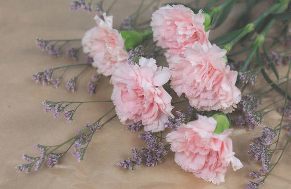 Màu hồng thơ mộng