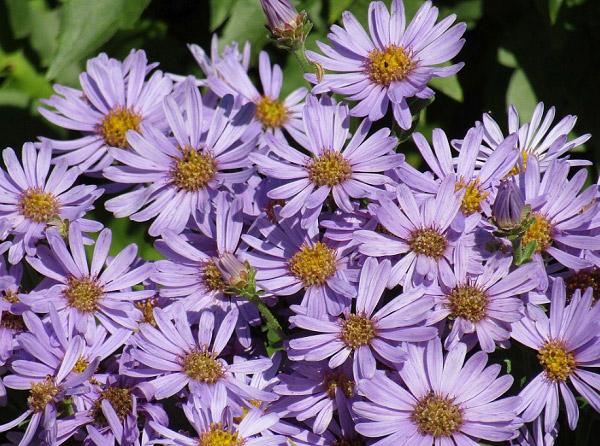 Những cánh hoa khoe sắc