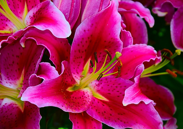 Hình hoa đẹp 2