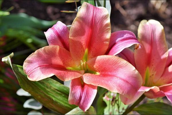 Hình hoa đẹp 3
