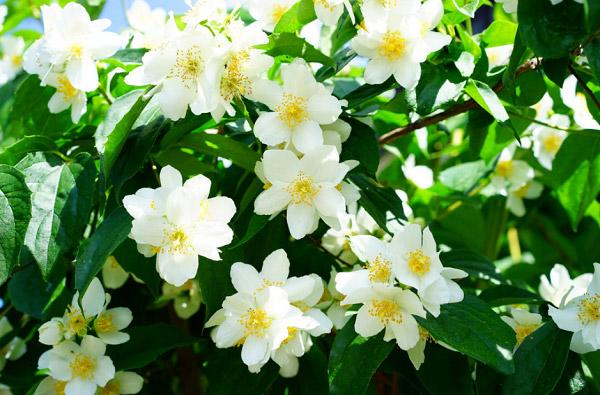 Những bông hoa nở bung cánh