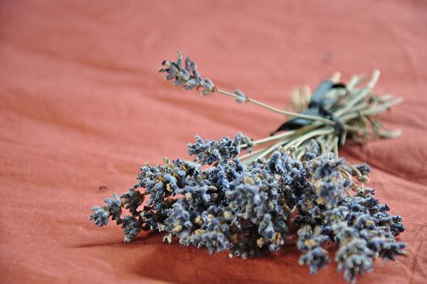 Bó hoa oải hương khô