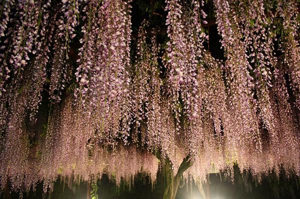 Hoa vào ban đêm