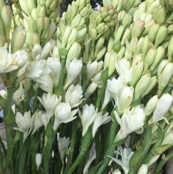 Những bông hoa vừa được thu hoạch