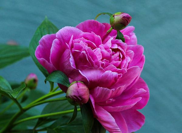 Ý nghĩa màu sắc của hoa