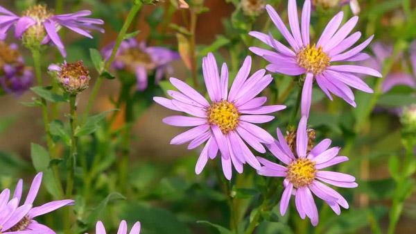Những bông hoa khoe sắc tím đẹp