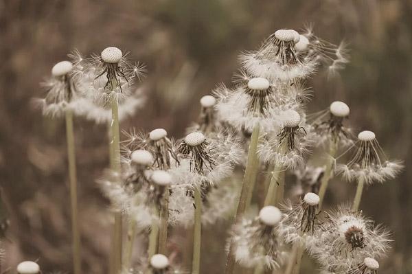 Hình ảnh những bông hoa sau khi tàn