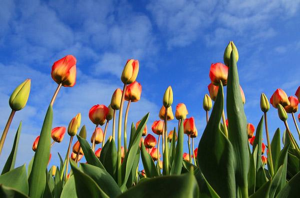 Những bông hoa vươn lên bầu trời trong xanh
