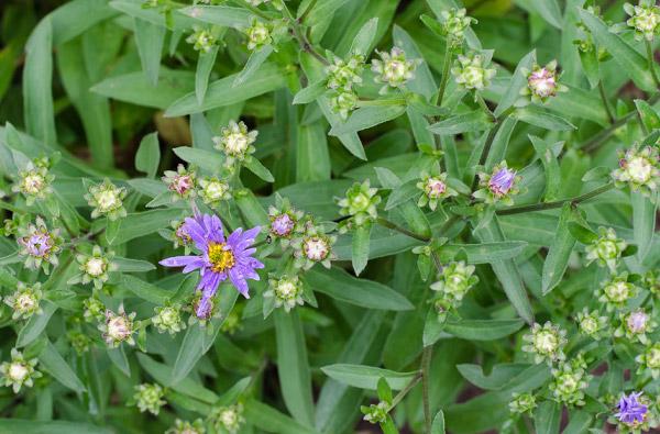 Những nụ hoa xanh mơn mởn