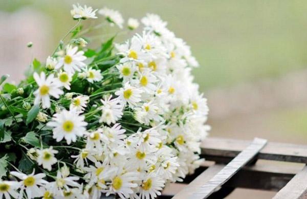 Hoa trắng tinh khôi