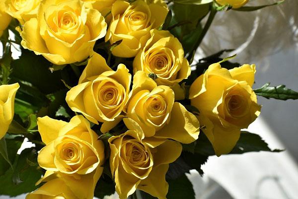 Bó hồng vàng đẹp