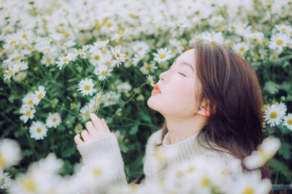 Chụp ảnh cùng cúc hoa mi