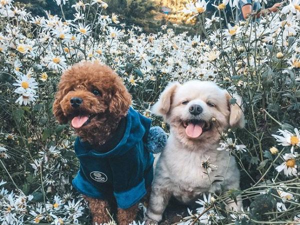 2 diện viên pose hình bên hoa cúc
