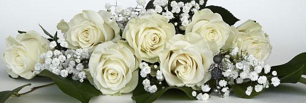 Hoa hồng trắng dùng để trang trí