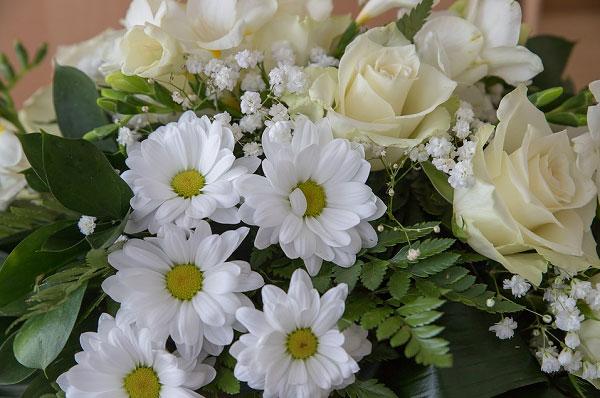 Hoa hồng trắng và hoa cúc trắng