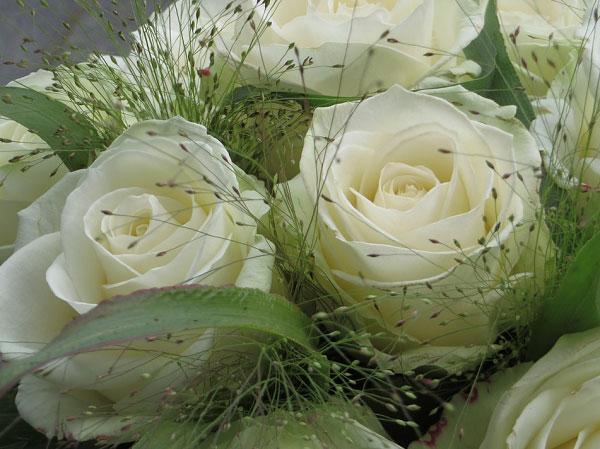 Hồng trắng và hoa cỏ