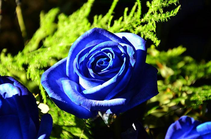 Những bông hoa khoe sắc dưới ánh sáng