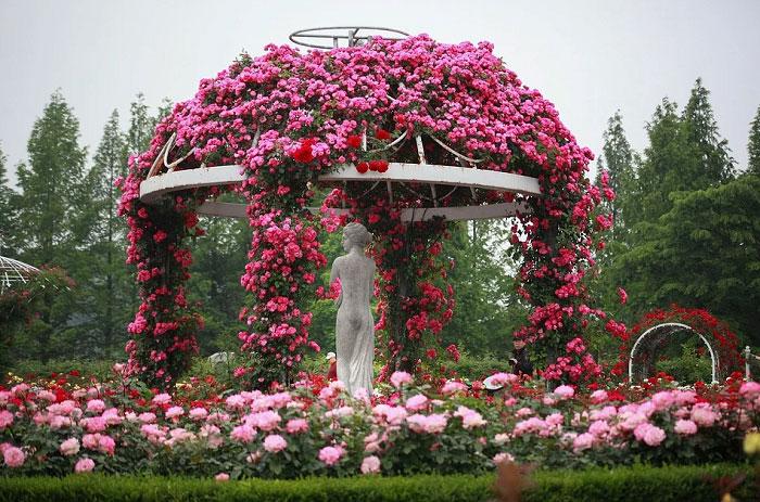 Mái vòm hoa hồng