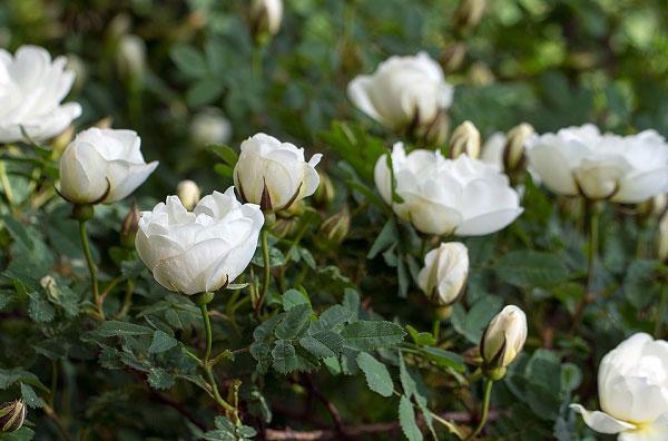 Hình ảnh một nhánh hoa nở tự nhiên