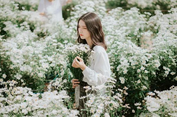 Nàng thơ bên những bông cúc họa mi