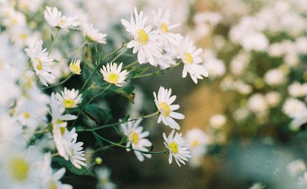 Bông hoa mong manh đón ánh sáng