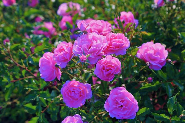 Sắc hoa tươi rực rỡ