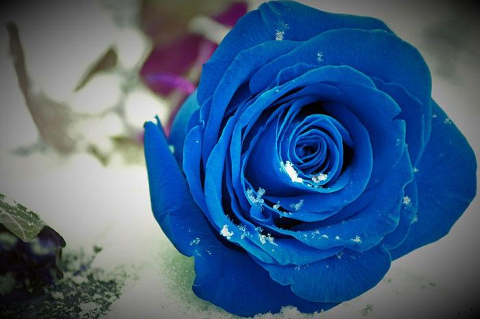 Sắc xanh tươi rất đẹp