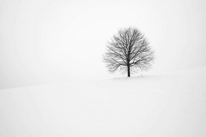Cây trụi lá trong mùa đông tuyết trắng